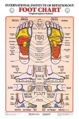 Foot Reflexology Chart Prime Foot Reflexology Chart Frcl