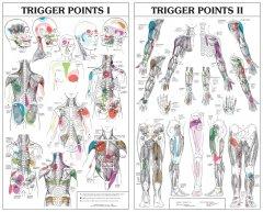Trigger Points Chart 2 Parts Soft Lamination Prime
